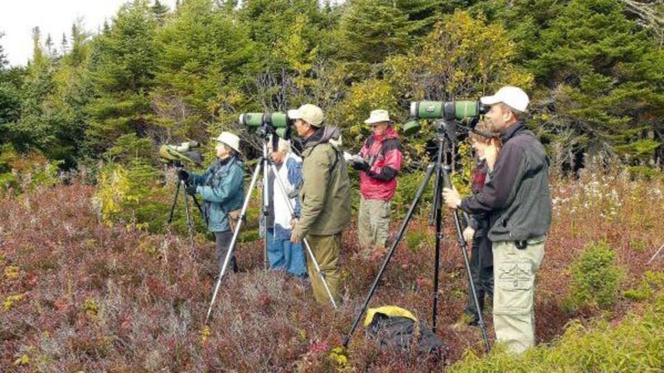 Les ornithologues surveillent l'évolution des oiseaux migrateurs avec le plus vif intérêt.