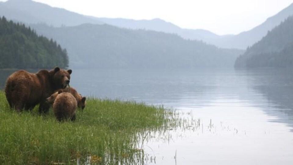Un groupe d'ours au bord d'un lac