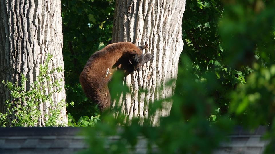 Un ours au bas d'un arbre.