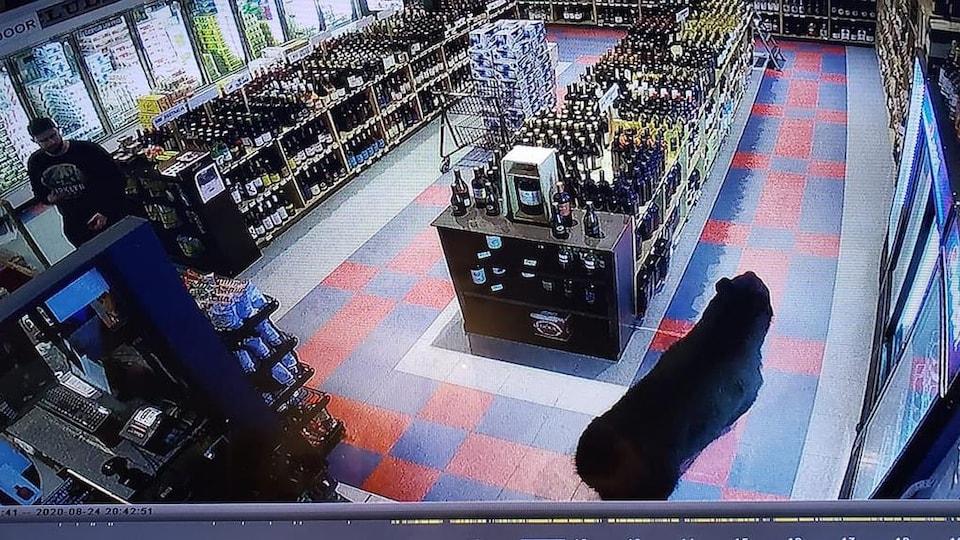Un ours s'avance dans une allée du magasin d'alcool sous le regard ébahi d'un client.