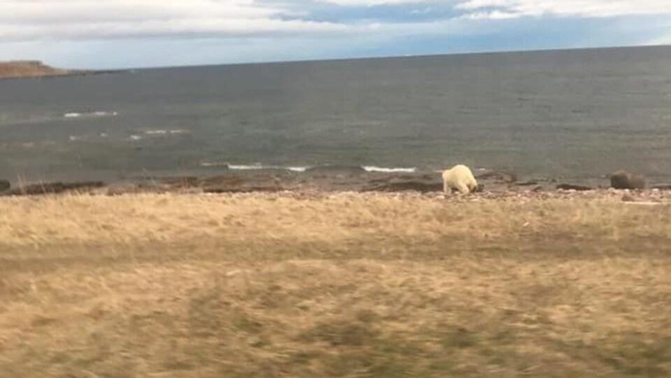 L'ours court vers l'eau.