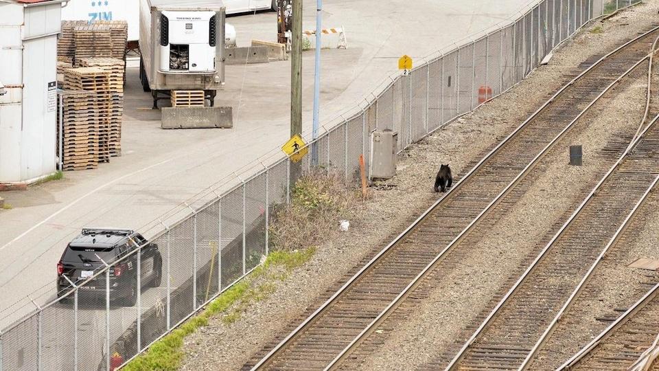 Un ours se promène sur une voie ferrée à Vancouver. Une voiture de police est stationnée non loin.