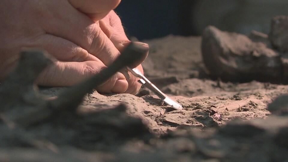 Une main tient un scalpel et gratte le fossile.