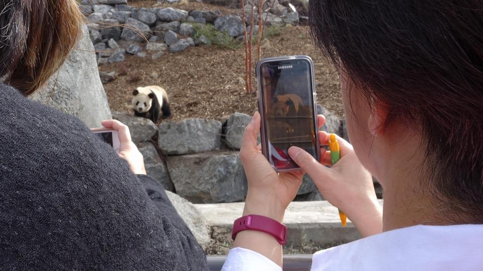 Deux visiteurs prennent un panda en photo avec leurs téléphones cellulaires.