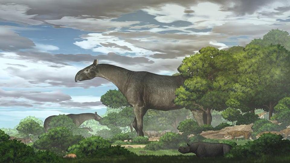 Reconstruction de l'apparence des rhinocéros géants dans la forêt.