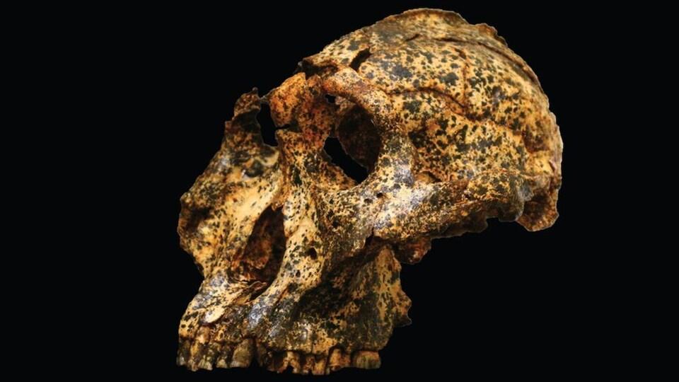 Un crâne sur fond noir.