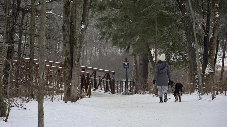 Une personne en randonnée pédestre avec son chien dans le parc de la Gatineau