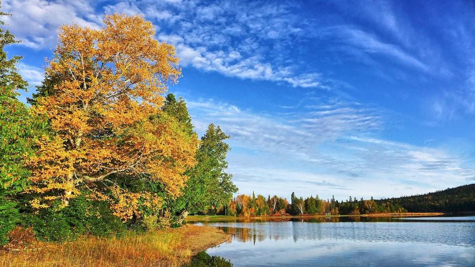 Des arbres sur le bord d'un lac.