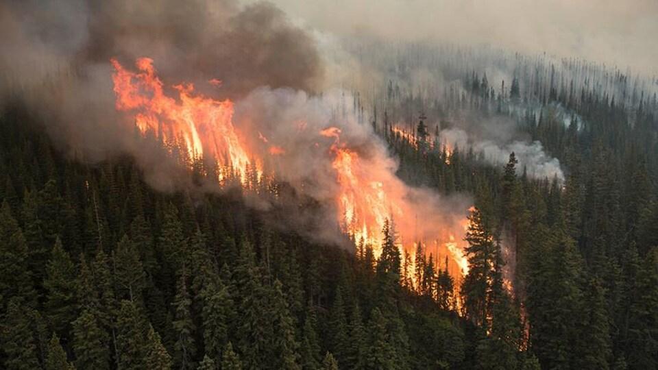 D'immenses flammes s'élèvent de la forêt qui est recouverte de fumée.