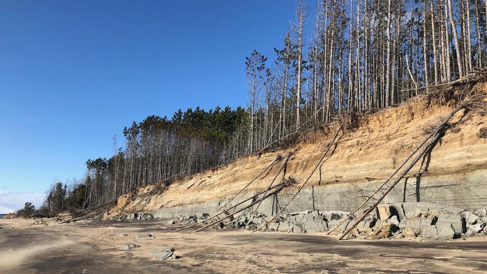Un flanc d'une butte de sable et d'argile s'érodant, emportant des arbres.
