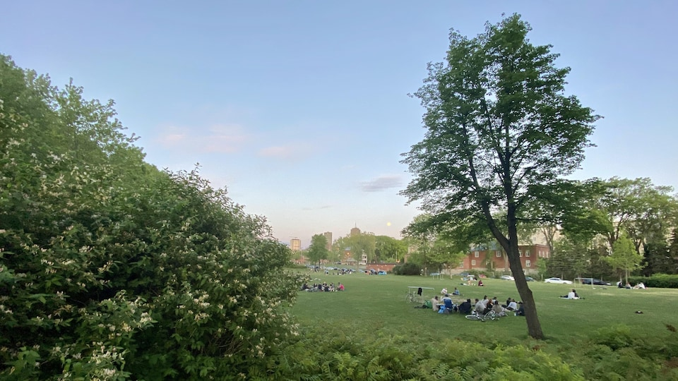 Des gens sont assis sur l'herbe dans un parc en début de soirée.
