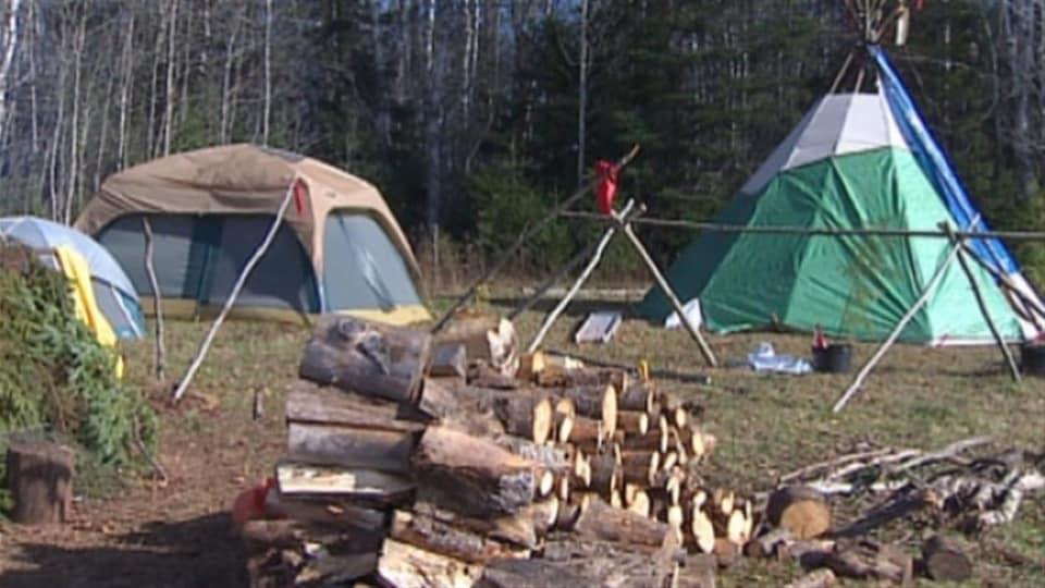 Terrain de camping avec du bois et des yourtes.