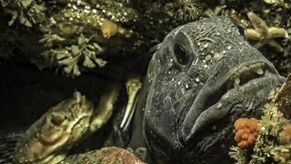 Un poisson et un crabe patientent près de petites roches.