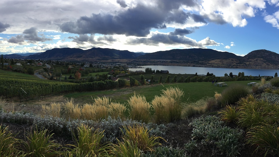 Un paysage magnifique, mélange de végétation luxuriante et de vignes avec un lac et des collines en arrière-plan