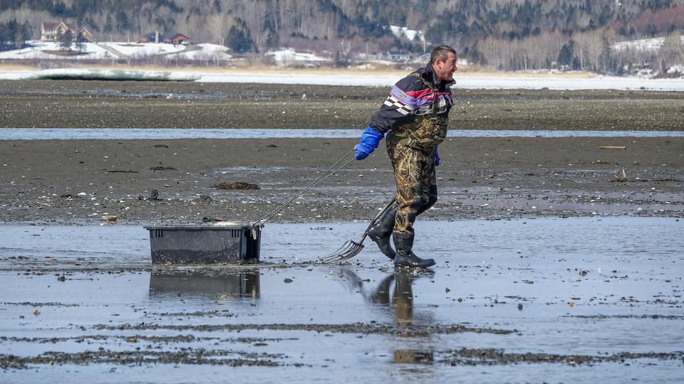 Un pêcheur de mye commune traîne un bac sur le rivage.