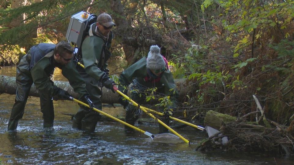 Trois employés de la Fédération de la protection de la nature de Souris s'active pour attraper des saumons dans un cours d'eau.