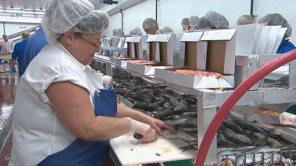 Des travailleurs du secteur de la pêche.