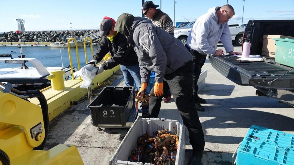 Des hommes pèsent des homards sur une balance et un autre note derrière.