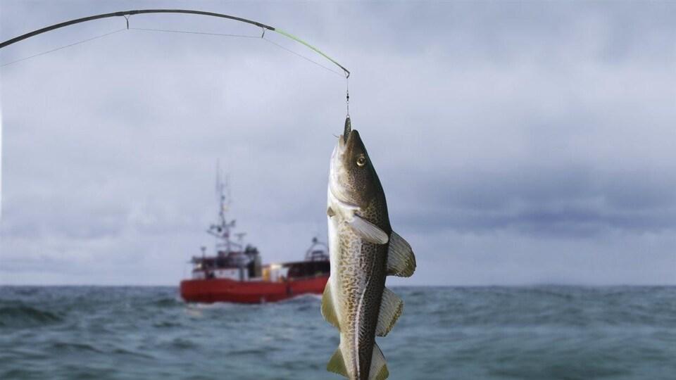 Une morue pend au bout d'une ligne à pêche.