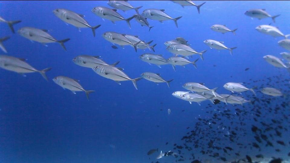Des poissons nagent dans l'océan