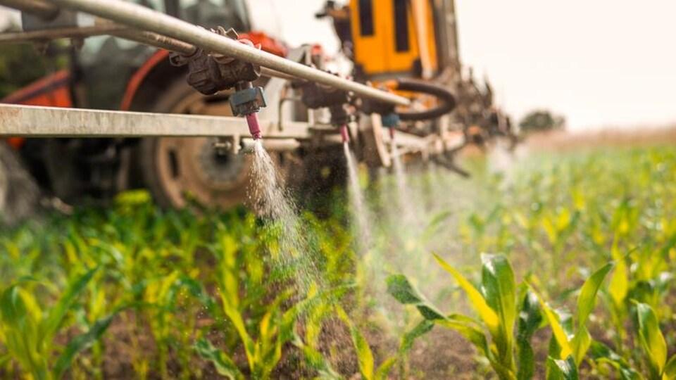 Épandage de pesticides.