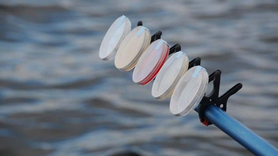 Des boîtes de Petri accrochées à un bâton