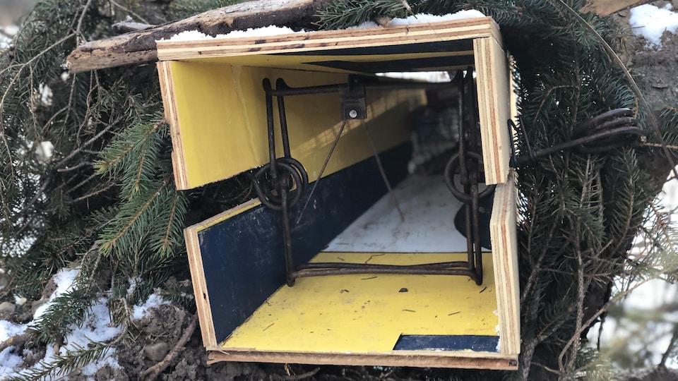 une boîte en bois caché dans des branches d'arbre.