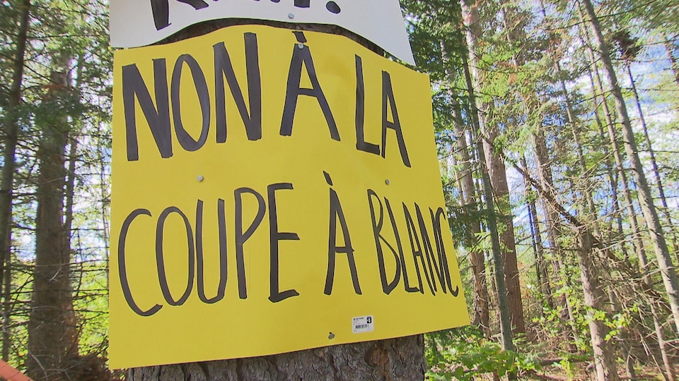 Sur l'affiche, on peut lire « Non à la coupe à blanc ».