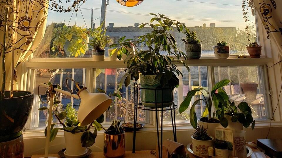 Des plantes d'intérieur.
