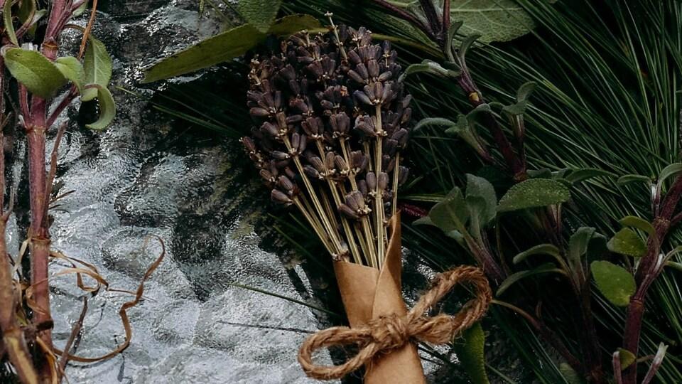 Un bouquet de lavande séchée entouré de verdure.