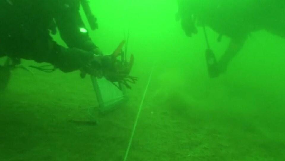 Deux plongeurs au fond de la baie de Fundy.