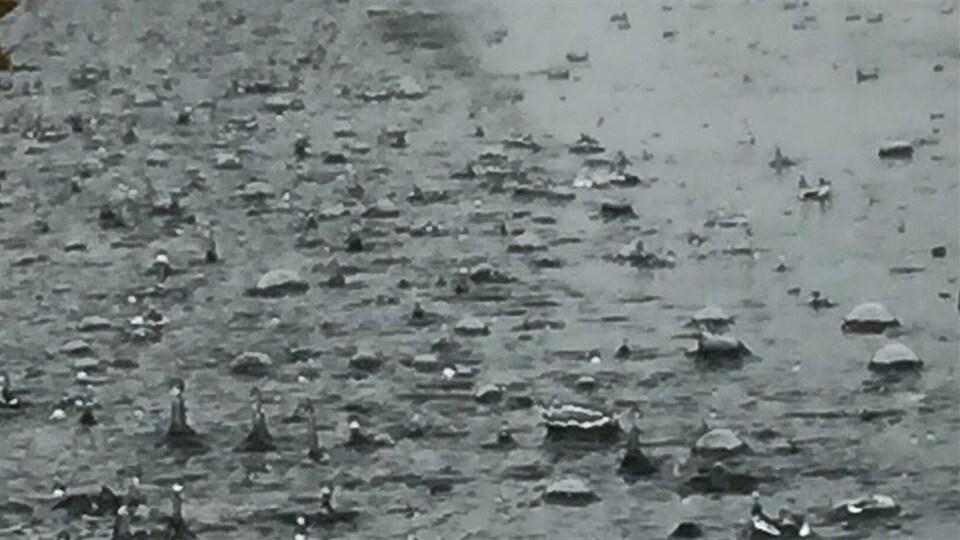 De la forte pluie tombe sur Halifax.
