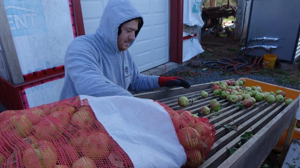 L'équipe de la cidrerie Double Hill décharge les pommes recueillies durant la semaine dans un verger à Caledonia, dans l'est de l'île.