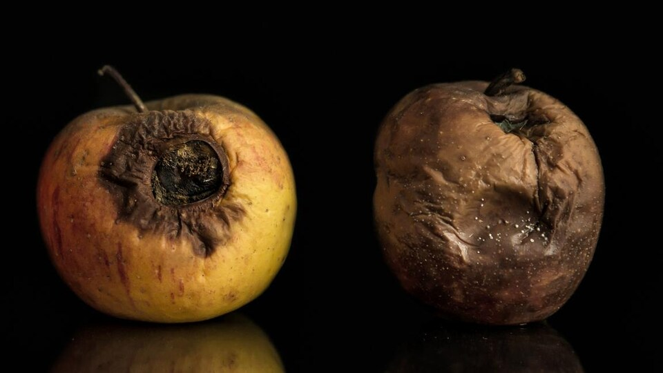 Deux pommes pourries.
