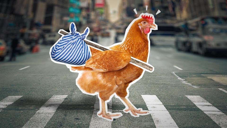Une poule avec un baluchon traverse un passage piéton