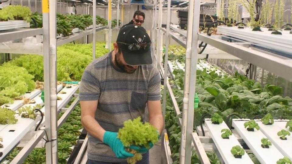 Un homme qui tient une salade verte dans ses mains. Il se trouve dans une serre.