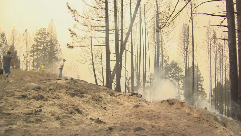 Des arbres brûlés près de Princeton, dans l'intérieur de la Colombie-Britannique