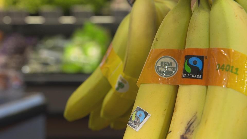 Des bananes biologiques