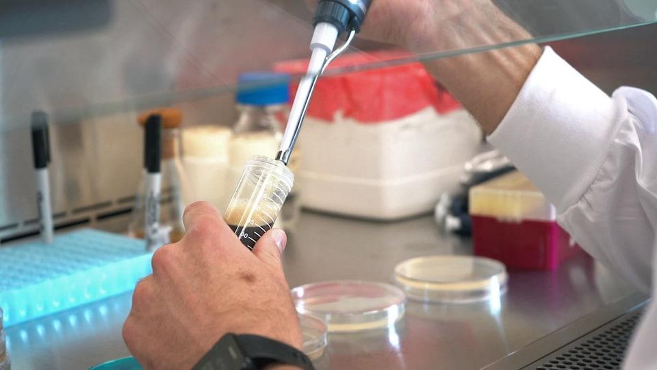 Un chercheur manipule des échantillons.