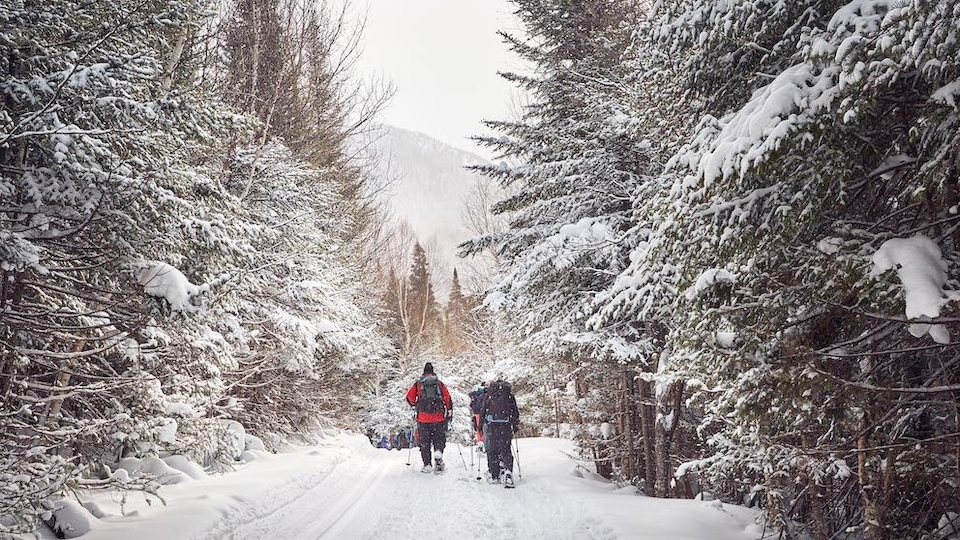 Des personnes skient en forêt.