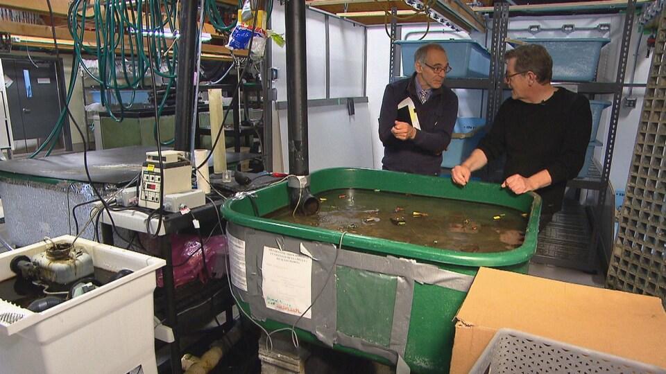 Le journaliste Denis Leduc et le professeur Pierre Blier discutent dans un local de recherche où se trouvent plusieurs instruments de recherche et le bassin où sont conservés les mollusques.