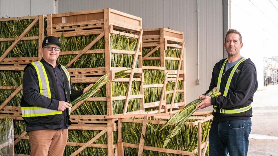Deux hommes aux côtés de caisses de plantes tropicales à la compagnie Rainbow Greenhouses.