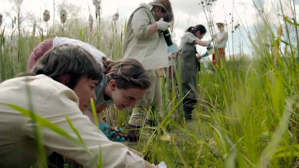 Plusieurs femmes se trouvent dans un marais.