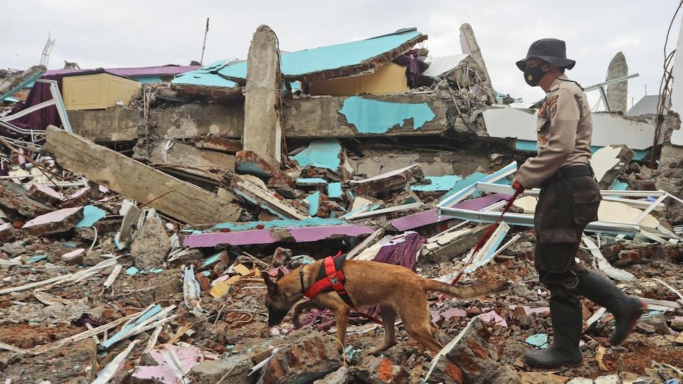 Un officier de police conduit un chien renifleur lors d'une recherche de victimes sur les ruines d'un bâtiment aplati par un tremblement de terre.