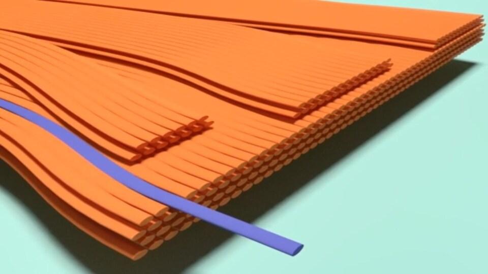 Modélisation en 3D de la structure du fil de soie de la «recluse brune».