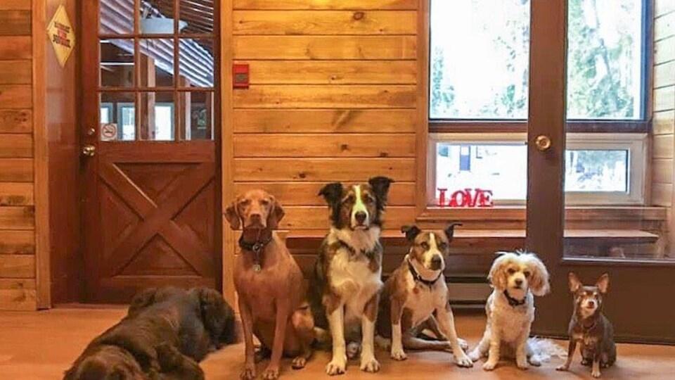 Le signe de l'entreprise sur un fond en bois, au bas, cinq chiens en ordre de taille décroissante.