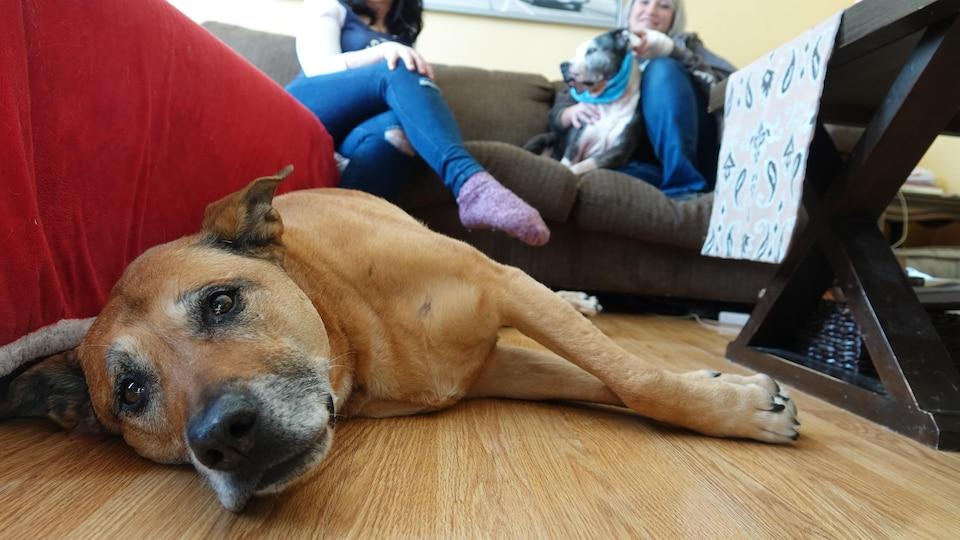 Un chien couché sur le plancher d'une maison.