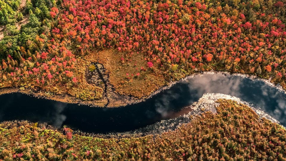 Vue aérienne avec des arbres en rouge et vert et une rivière.