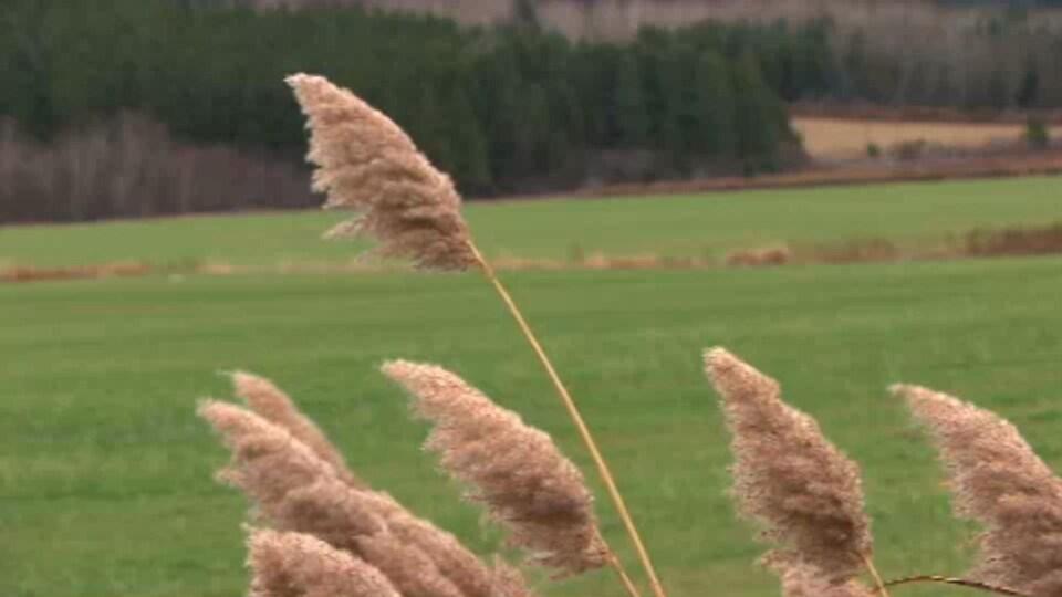 Un champ agricole.