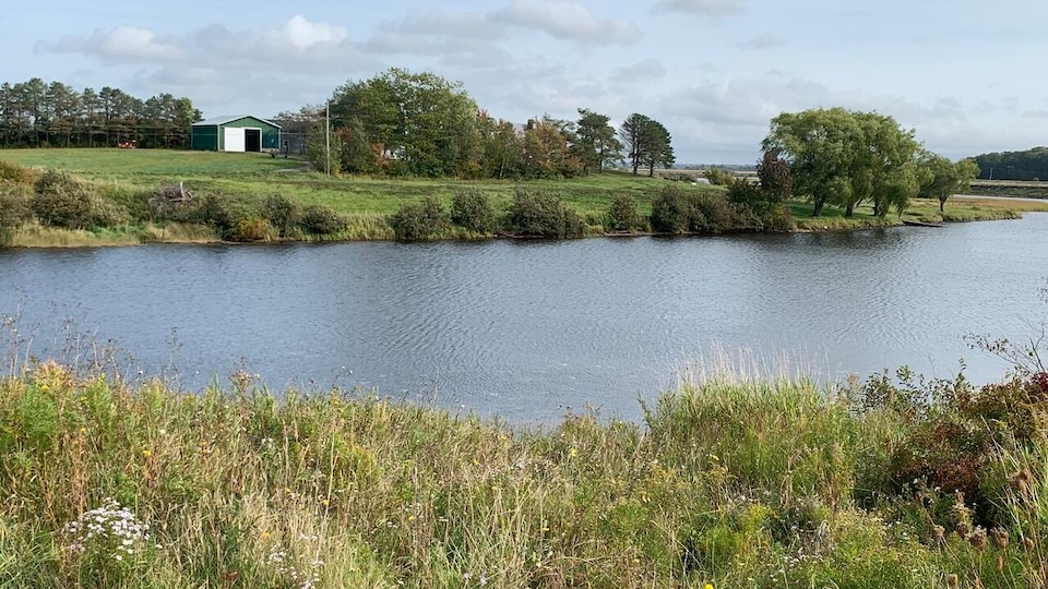 Le cours d'eau est bordé de végétation et de fleurs sauvages.